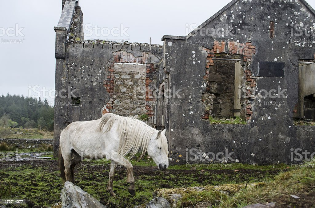White horse and ruins royalty-free stock photo
