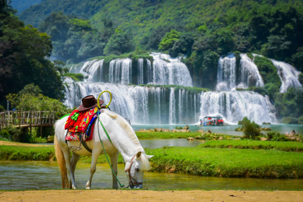 White horse are grazing in the field in front of the waterfall stock photo