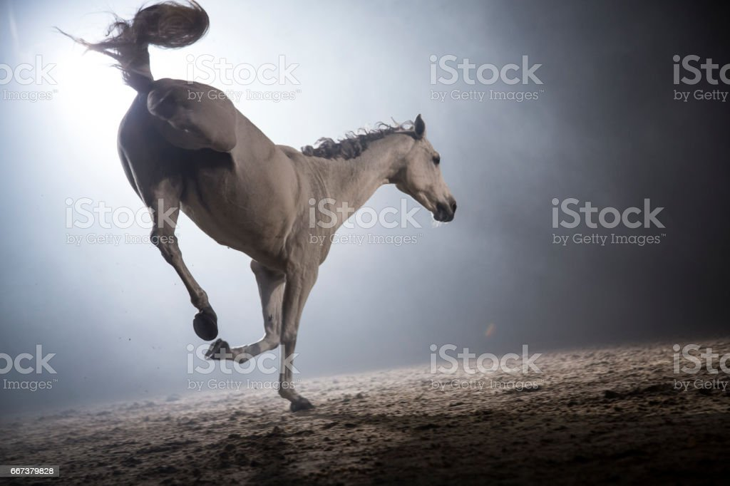 White horse bucking stock photo