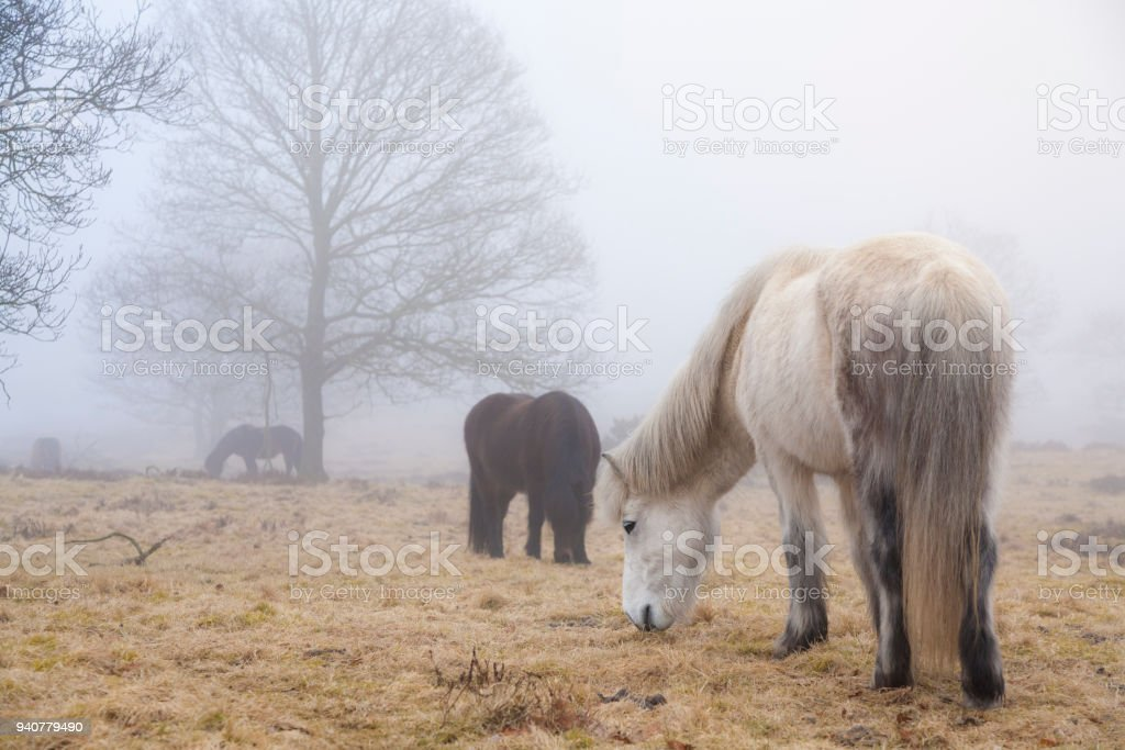 white horse grassing in foggy landscape stock photo