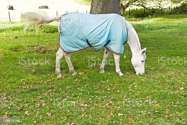 White Horse Grazing On Grass Stock Photo - Download Image Now