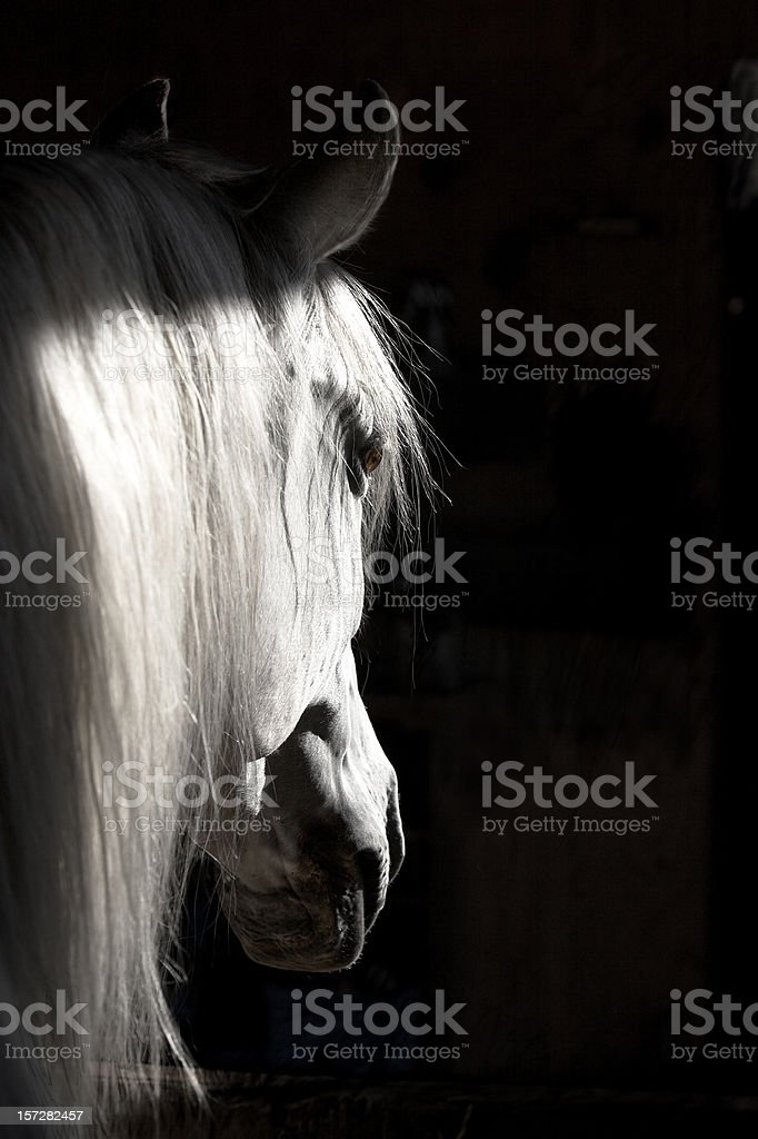 White Horse High Contrast stock photo