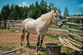 Horse in a farm, close-up