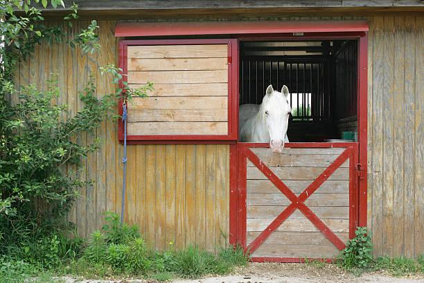 White horse in barn stock photo