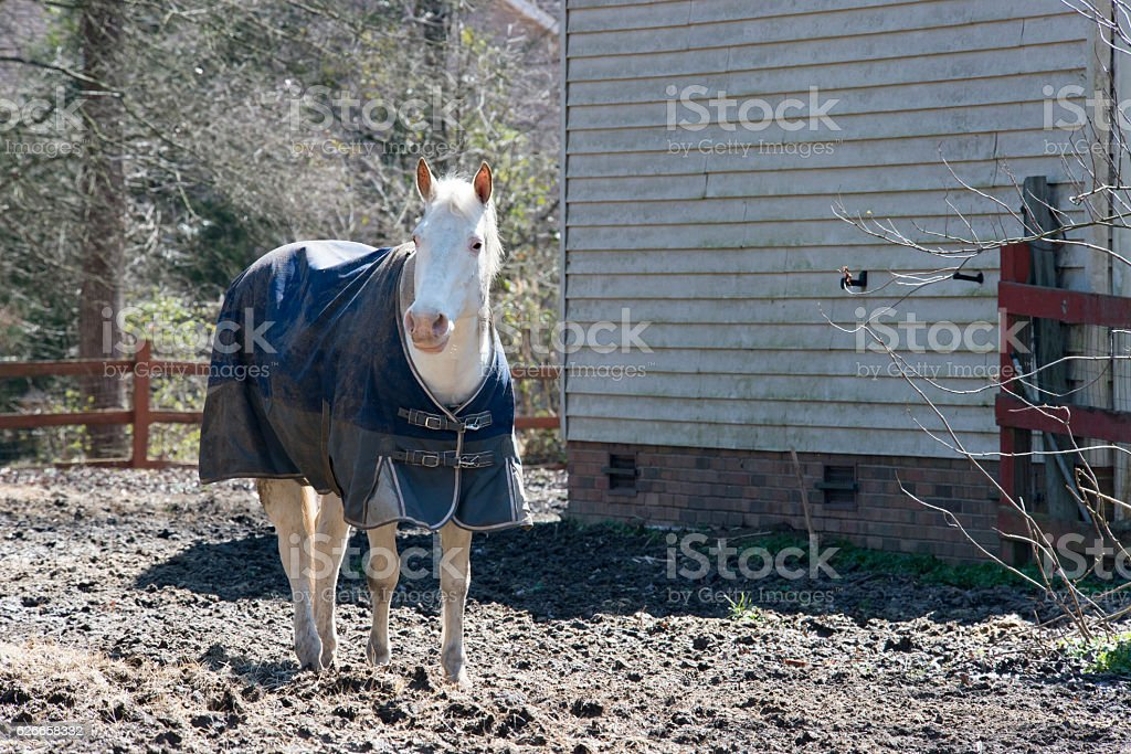 White Horse in Blue stock photo