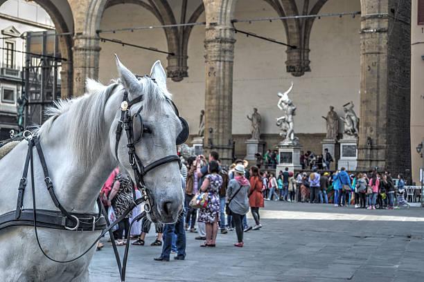 weißes pferd auf der piazza della signoria - scheuklappe stock-fotos und bilder