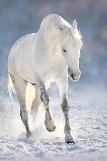 White horse in snow picture id879568190?b=1&k=6&m=879568190&s=612x612&w=0&h=vdcrs2l780oajofeht6gjw ovmcscdacbxafspspuyw=