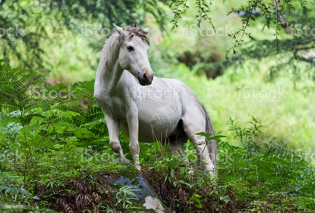 White horse in the middle of a forest wearing a unicorn horn royalty-free stock photo