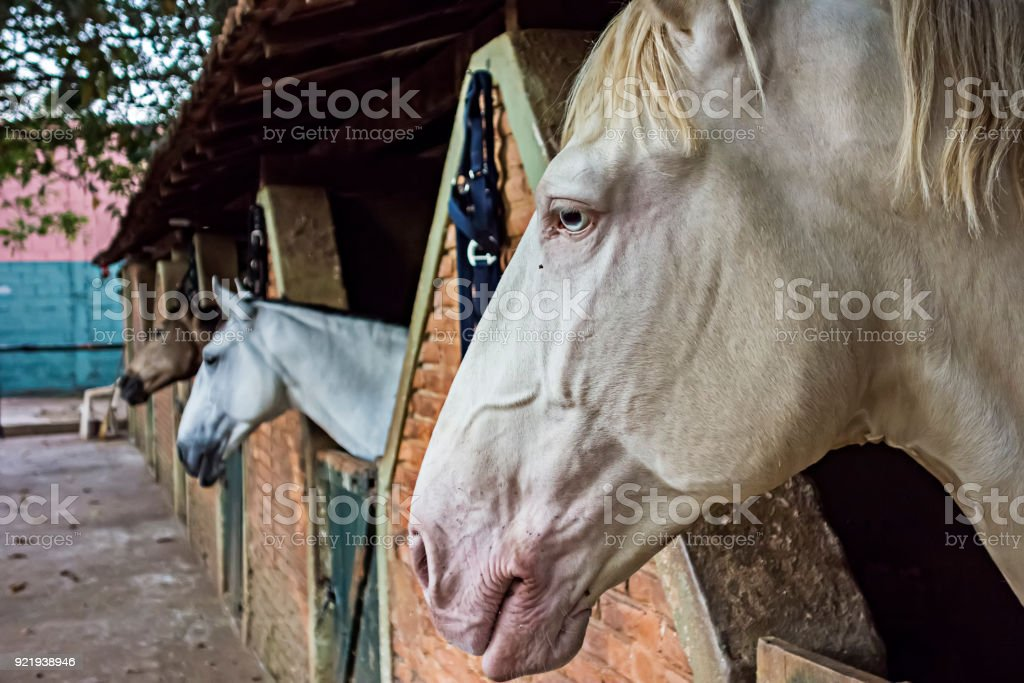 White Horse In The Stable Stock Photo Download Image Now Istock