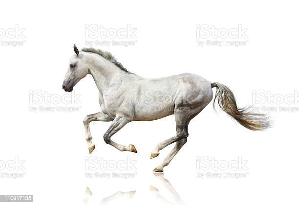 White horse isolated picture id110917135?b=1&k=6&m=110917135&s=612x612&h=blxf1 h6bm3aah9ymqakaewy08s jtjp6 7lnvgvaya=