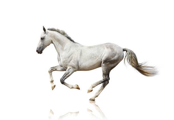 White horse isolated picture id110917135?b=1&k=6&m=110917135&s=612x612&w=0&h=zhhurrlmukpiveomoqt6ojovhzdj zvqehnqj xjsh0=