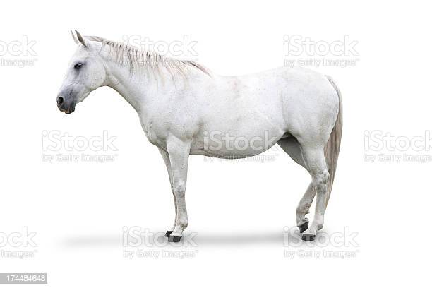 White horse isolated picture id174484648?b=1&k=6&m=174484648&s=612x612&h=c1uqzrkwbze 4e2t9z5keuurf6o2zucc5ltzic97uyw=