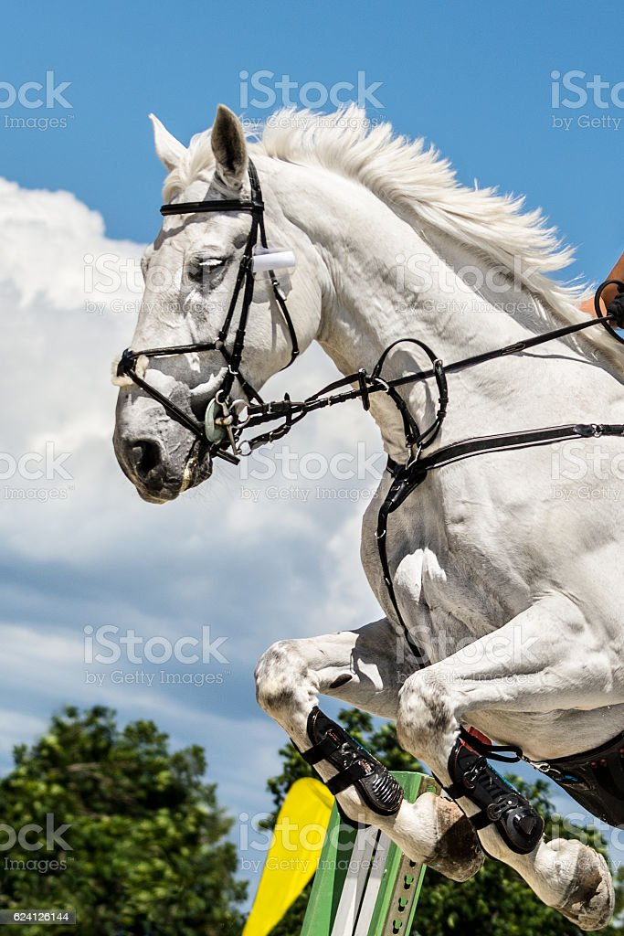White Horse Jumping Over Hurdle Stock Photo Download Image Now Istock