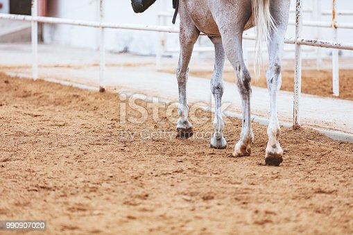 Ridden white horse slowly stepping