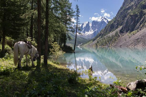 Weißes Pferd in der Nähe der blauen See. – Foto
