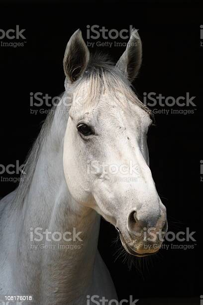 White horse picture id108176018?b=1&k=6&m=108176018&s=612x612&h=cowkhzeqbxj9z3rlpivq7lrs3h8j95pkagtzty0go7k=