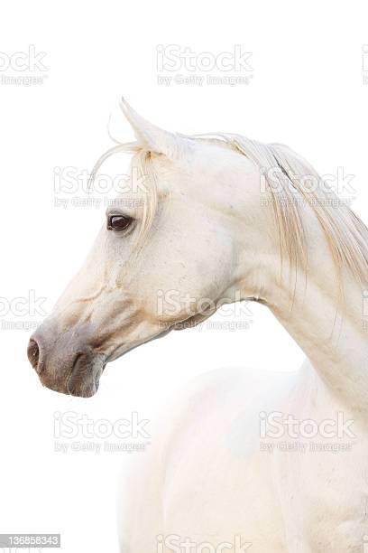 White horse picture id136858343?b=1&k=6&m=136858343&s=612x612&h=6ohl61 llfdwcrfokw ukni2tesvnosszigxafsnhjq=