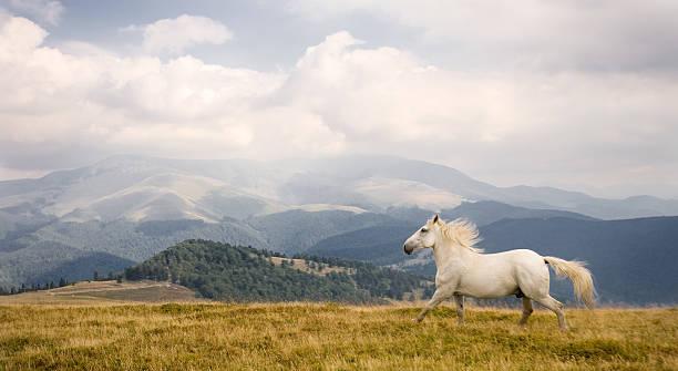 White horse picture id176956595?b=1&k=6&m=176956595&s=612x612&w=0&h=cuqk ceeelzqqgr3d7ftj3fmltnv2ni zlcum1gcqfq=