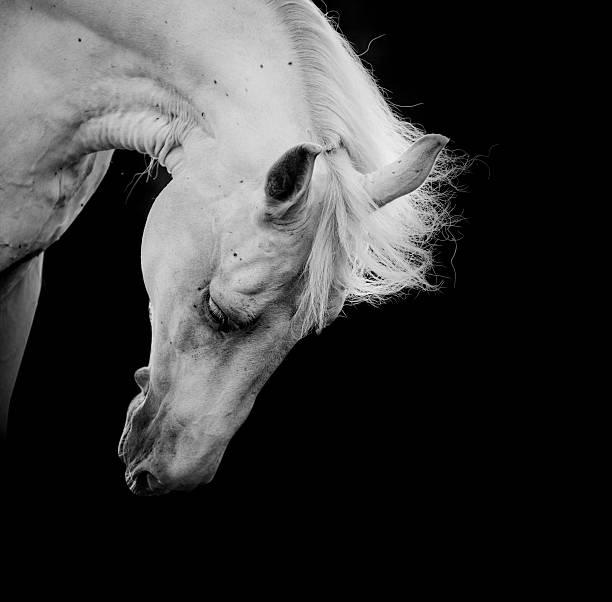 White horse picture id185033963?b=1&k=6&m=185033963&s=612x612&w=0&h=bzmssqbfiwpwgn0bdkemvbzo89vihbdhqaih fsenww=