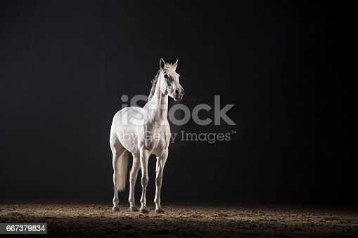 White horse standing on track at night.