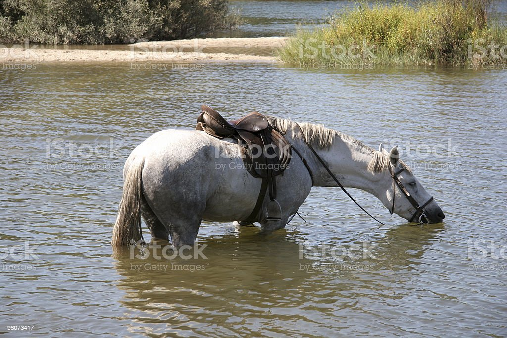 Cavallo bianco foto stock royalty-free