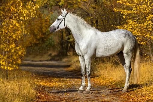 White horse portrait in autumn