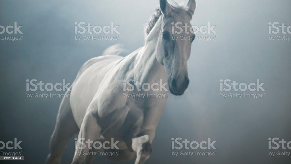 White horse running stock photo