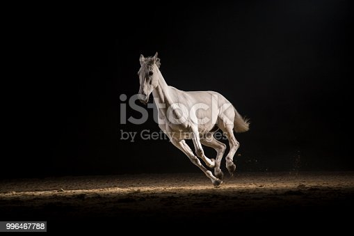 White horse running at night. Silhouette photo of a horse at night.