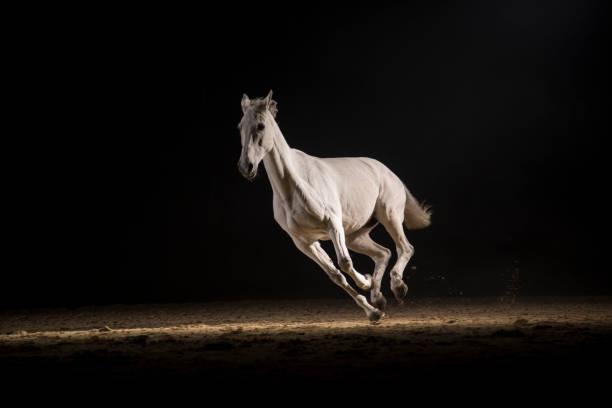 White horse running picture id996467788?b=1&k=6&m=996467788&s=612x612&w=0&h=gr5f2u grt2spogixzyjehc8pp5l81nssyl9w34zhha=