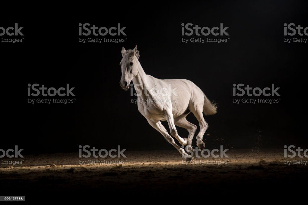 Caballo blanco corriendo - foto de stock