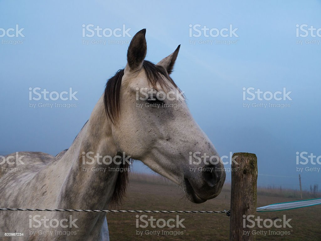White Horse standing on a paddock foto royalty-free