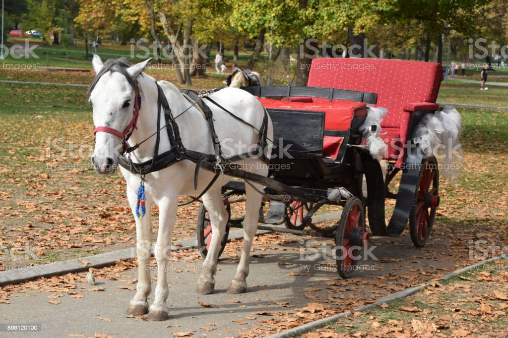White Horse Stapped In A Wedding Carriage Stock Photo Download Image Now Istock