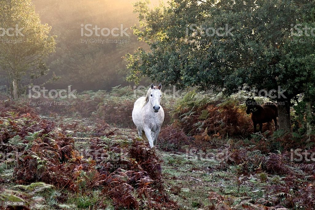 white horse trotting autumn mist at dawn stock photo