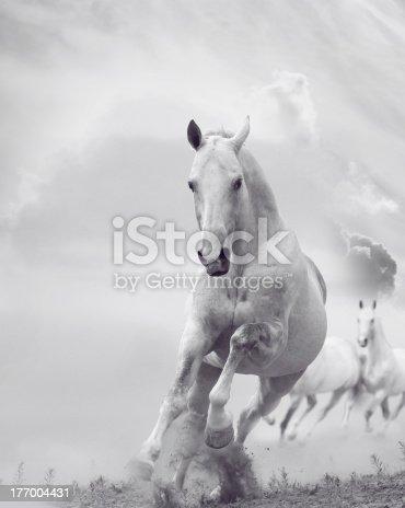 white stallion running in dust in the wild