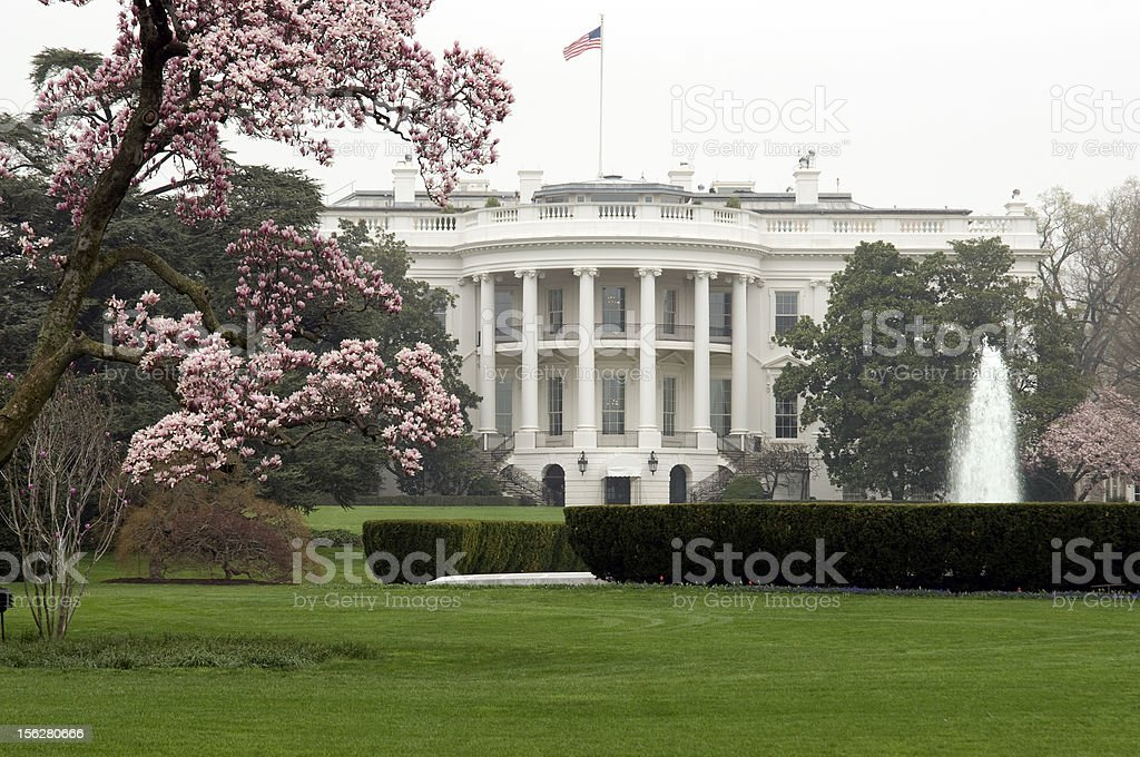 White House framed by Magnolia trees stock photo