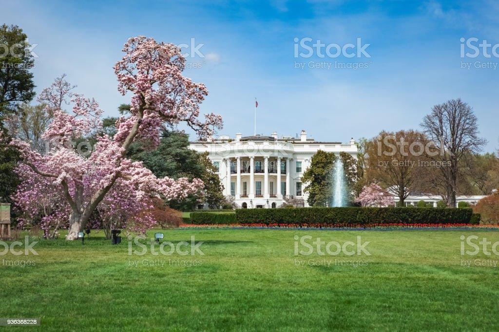 White House in Spring stock photo