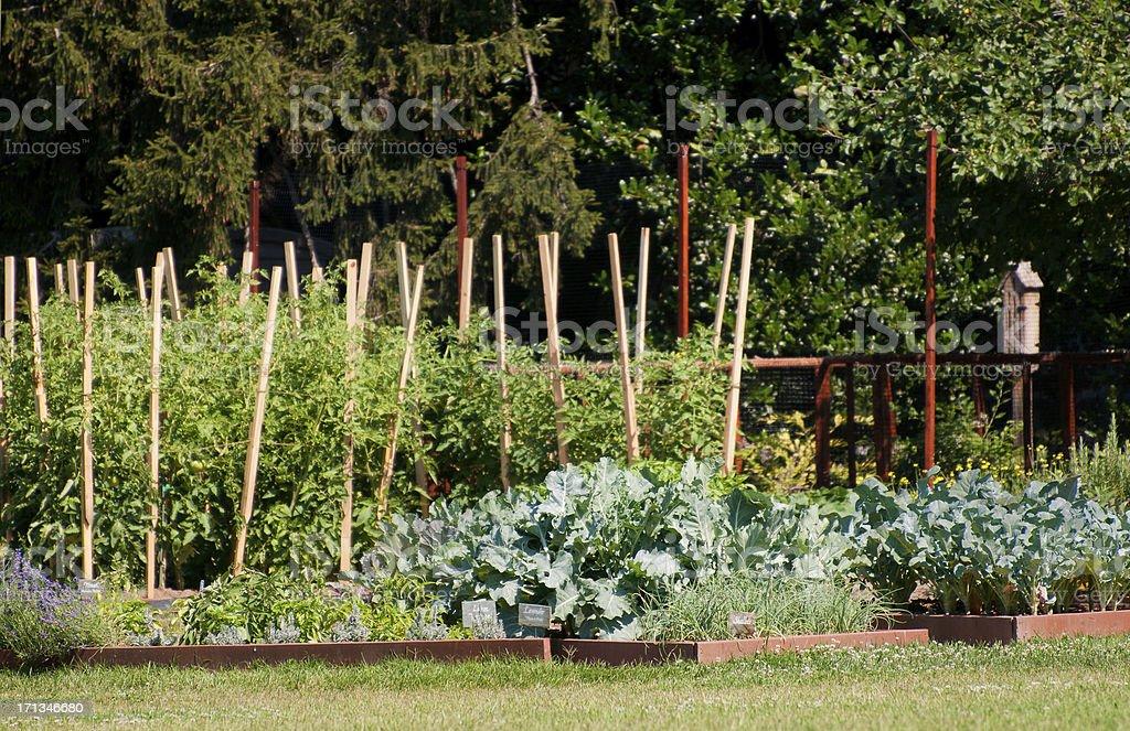 White House KitchenVegetable Herb Garden, Washington DC, USA royalty-free stock photo