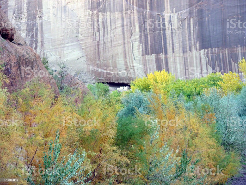 White House Ruin with Russian Olive Trees stock photo