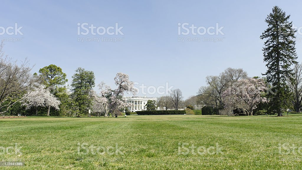 white house with cherry blossoms royalty-free stock photo