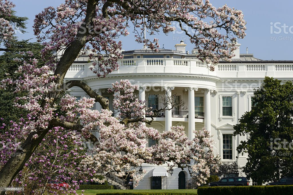 Us White House With Flowering Magnolia Tree Washington Dc Stock