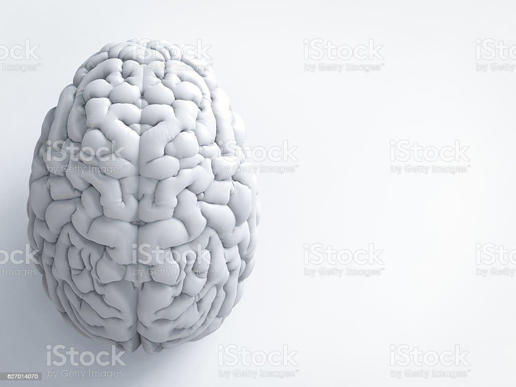 white human brain stock photo