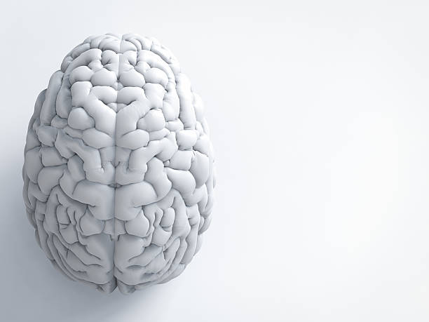 white human brain 3d rendering white human brain on white background neurosurgery stock pictures, royalty-free photos & images