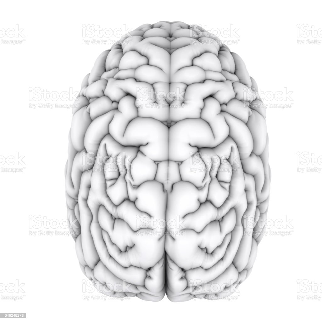 White Human Brain Stock Photo More Pictures Of Alzheimers Disease
