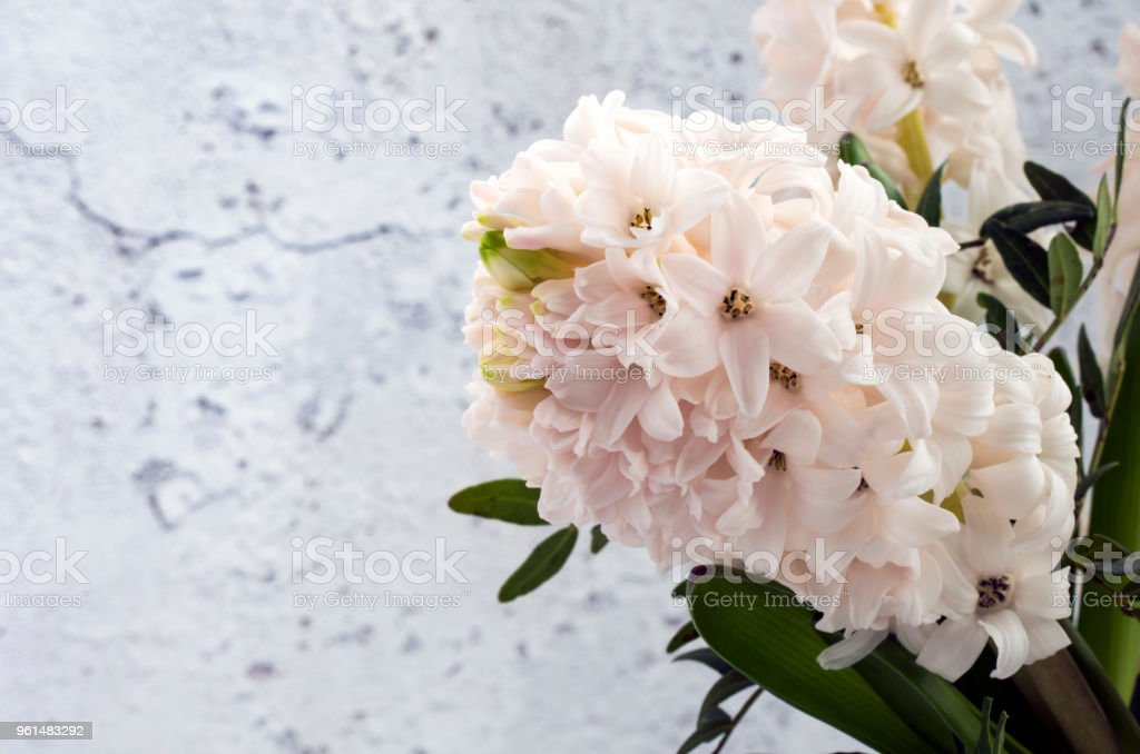 White Hyacinth with Copy Space to the Left stock photo