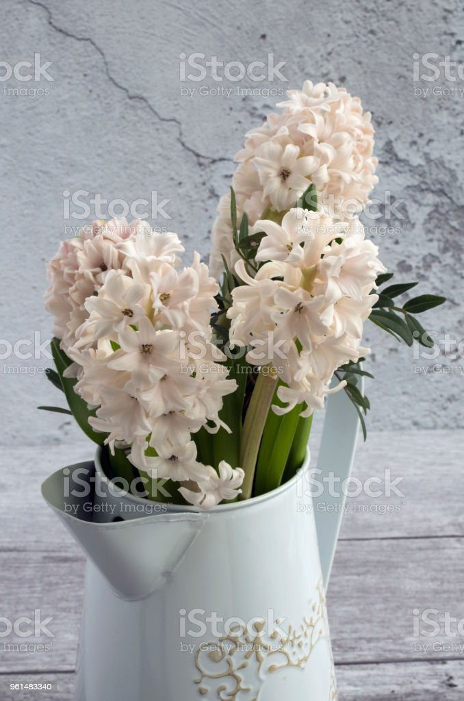 White Hyacinths stock photo