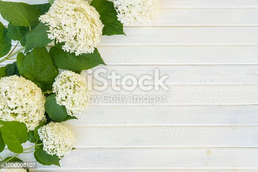 Fresh white Hydrangea on a wood base