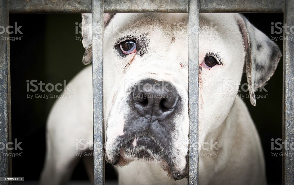 White isolated dog in a metal grid frame stock photo