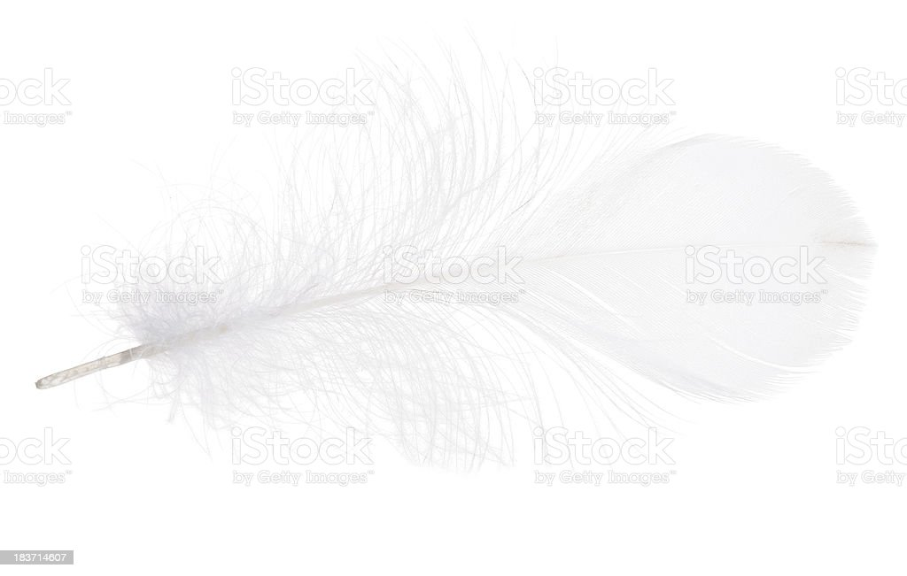 white isolated fluffy feather stock photo