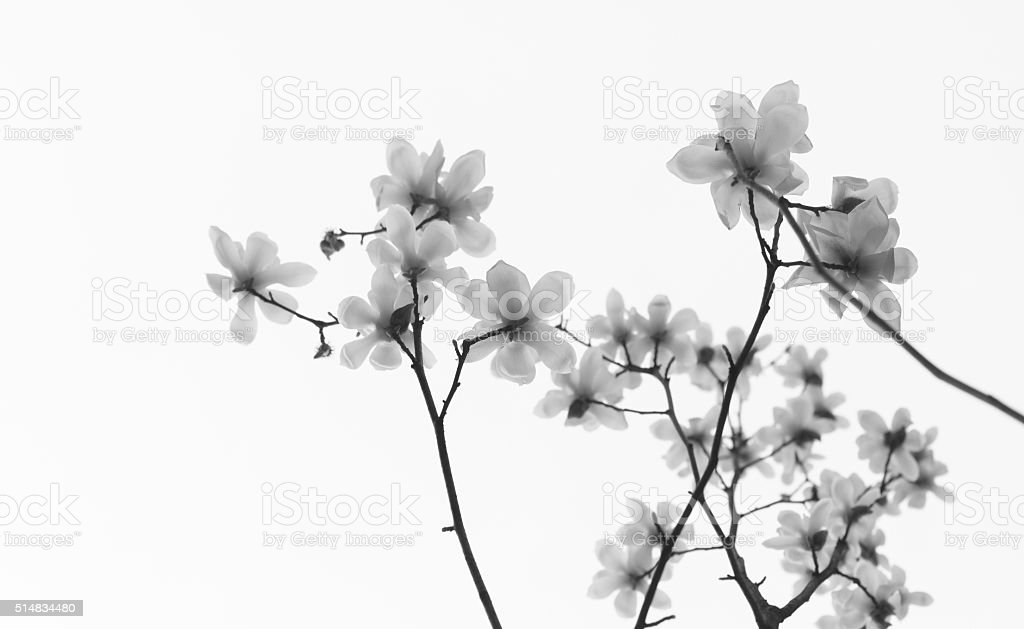 White jade orchid background stock photo