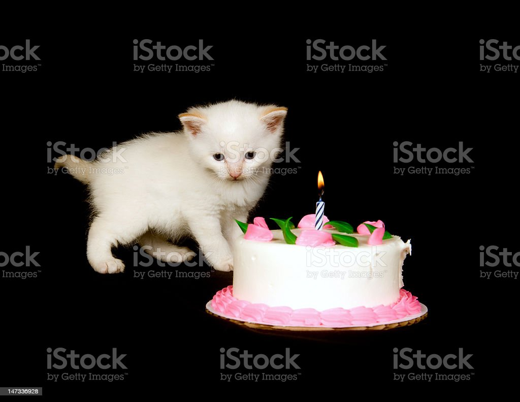 White Kitten And Birthday Cake Stock Photo More Pictures Of Animal